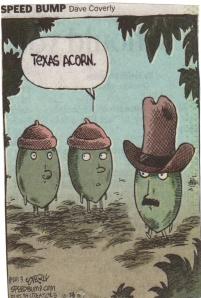 Texas Acorn