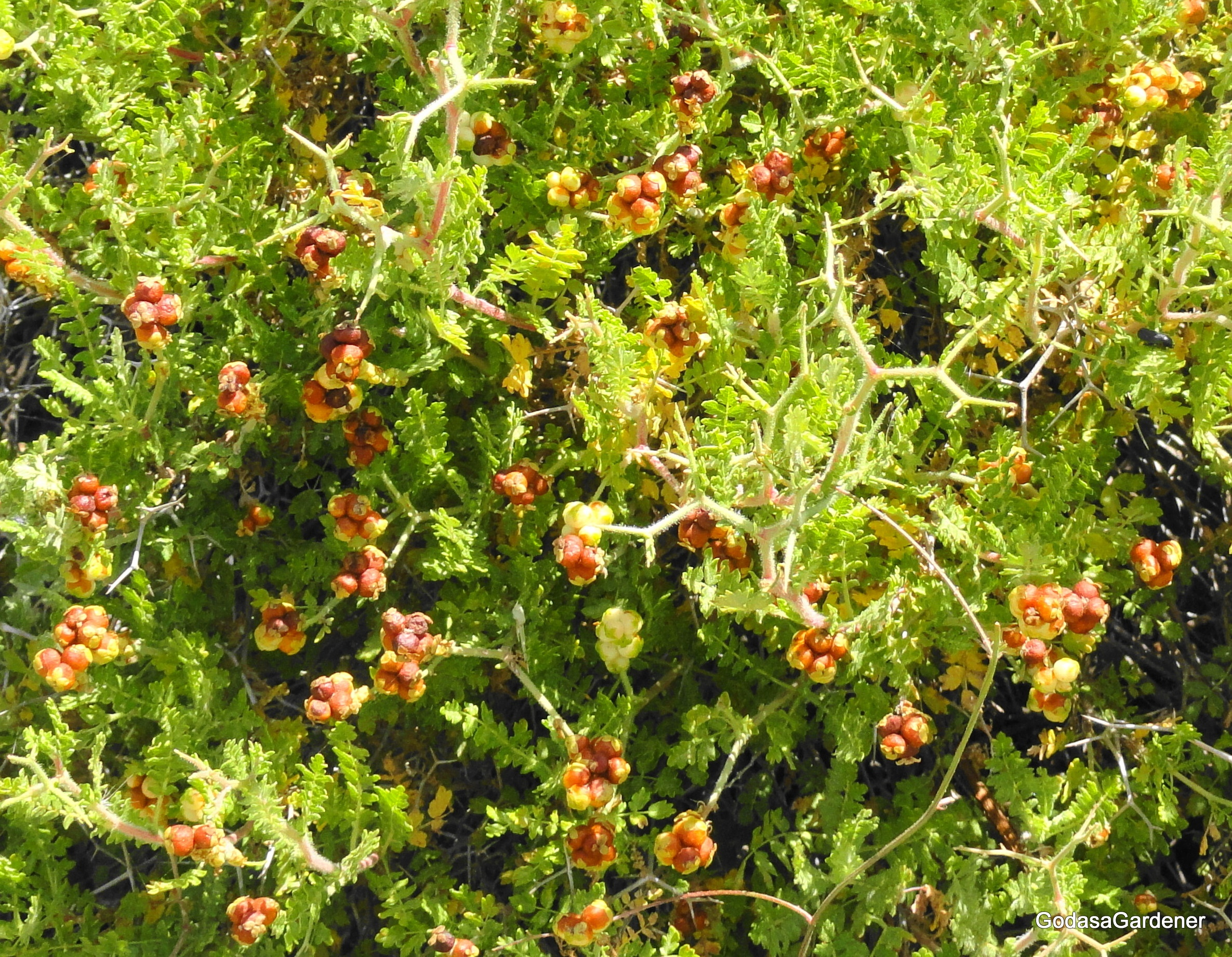 Plants In The Wisdom Literature God As A Gardener