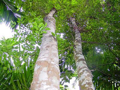 Eaglewood tree | God as a Gardener