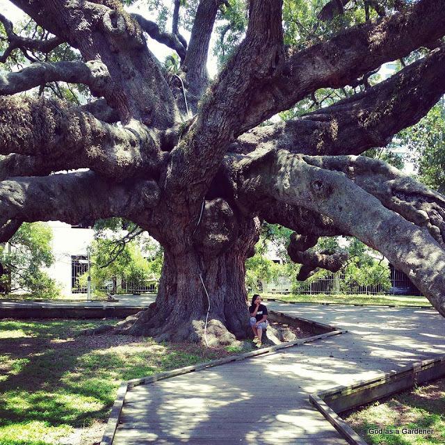 Friendship And The Treaty Oak God As A Gardener
