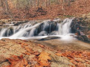 jim-forney-fall-scene